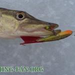 Дневник рыбака 12 01 13 г. Зимняя рыбалка, ловля щуки на р. Волчья в январе месяце.
