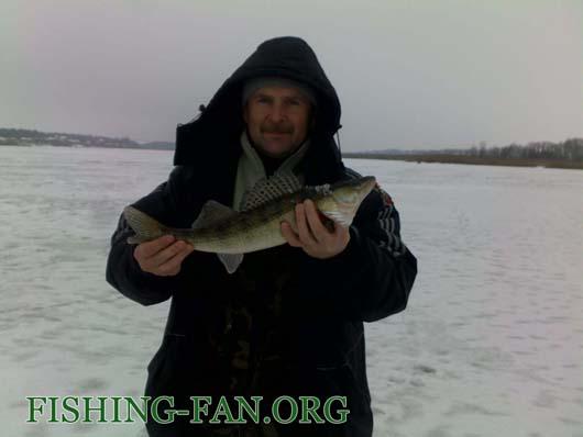 Ловля судака на балансиры со льда в феврале