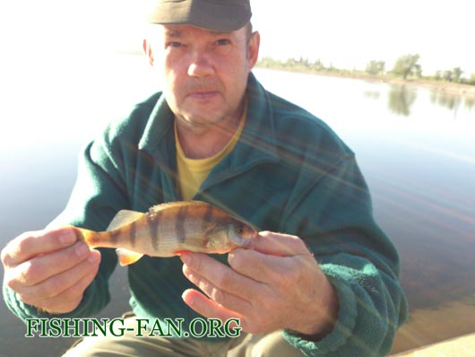 Ловля окуня на реке Сухие Ялы