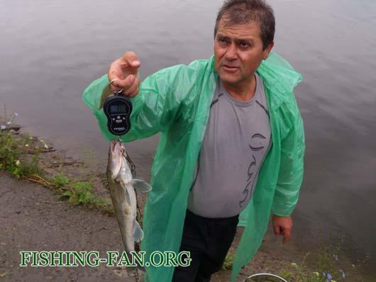 Ловля судака на спиннинг в Донецкой области