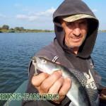 Дневник рыбака 12 09 13г. Ловля хищника на спиннинг с лодок в начале сентября.