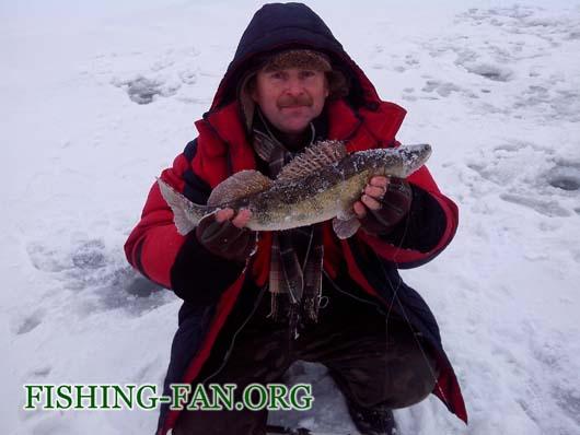 Ловля судака на балансиры со льда