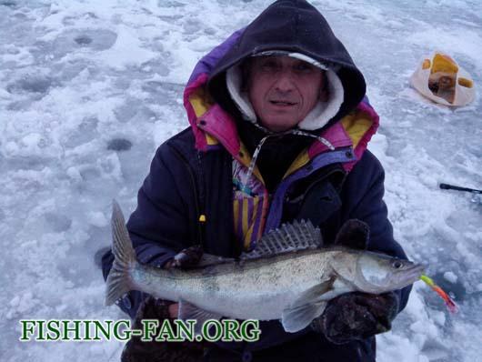 ловля судака со льда на балансиры