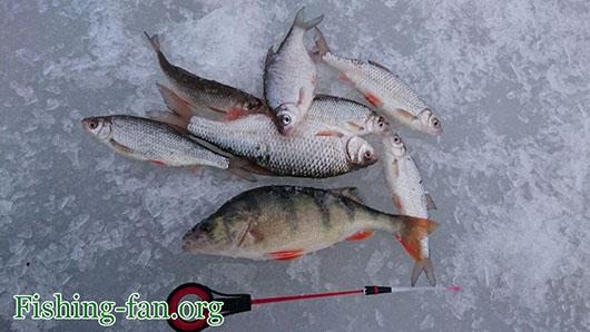окунь Рыбалка в финляндии